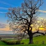 IELTS Speaking topic: Trees